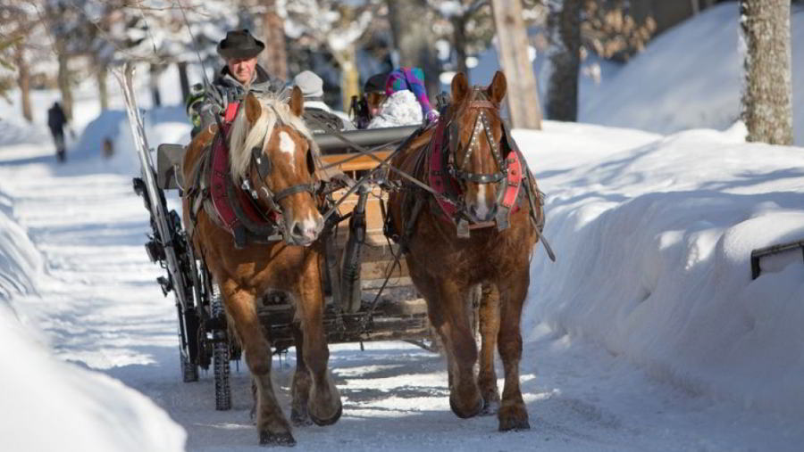 A family trip in a traditional horse-drawn sleigh to discover unique landscapes around Megève.