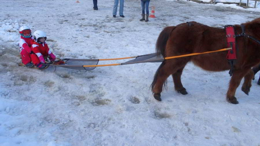 Photo of a kid on a sled behind a pony, a funny activity for children from one year old in Megève.