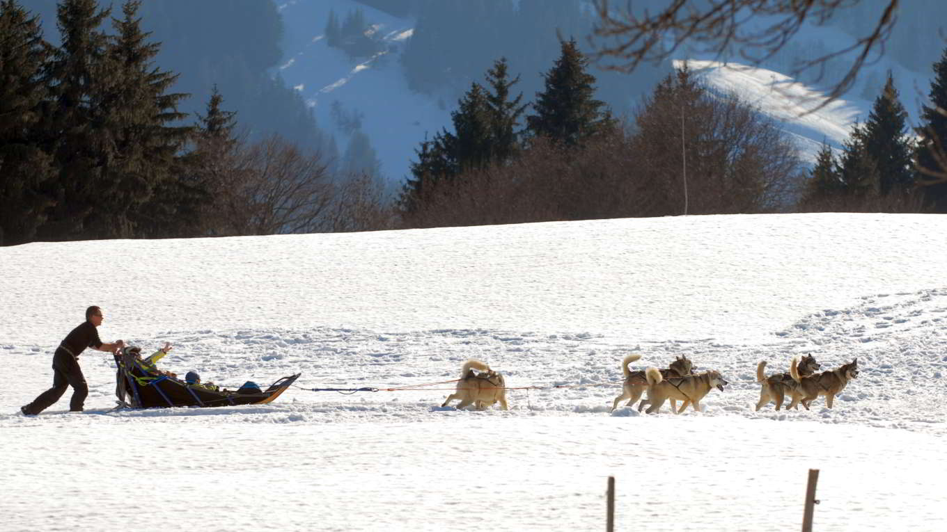 Picture of Megeve dog sledding, the amazing winter activity for families !